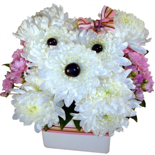 foxgloves flowers victoria bc florist fresh compacts modern