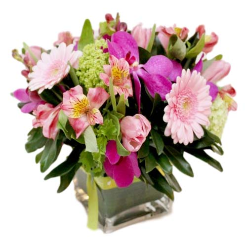 foxgloves flowers victoria bc florist 