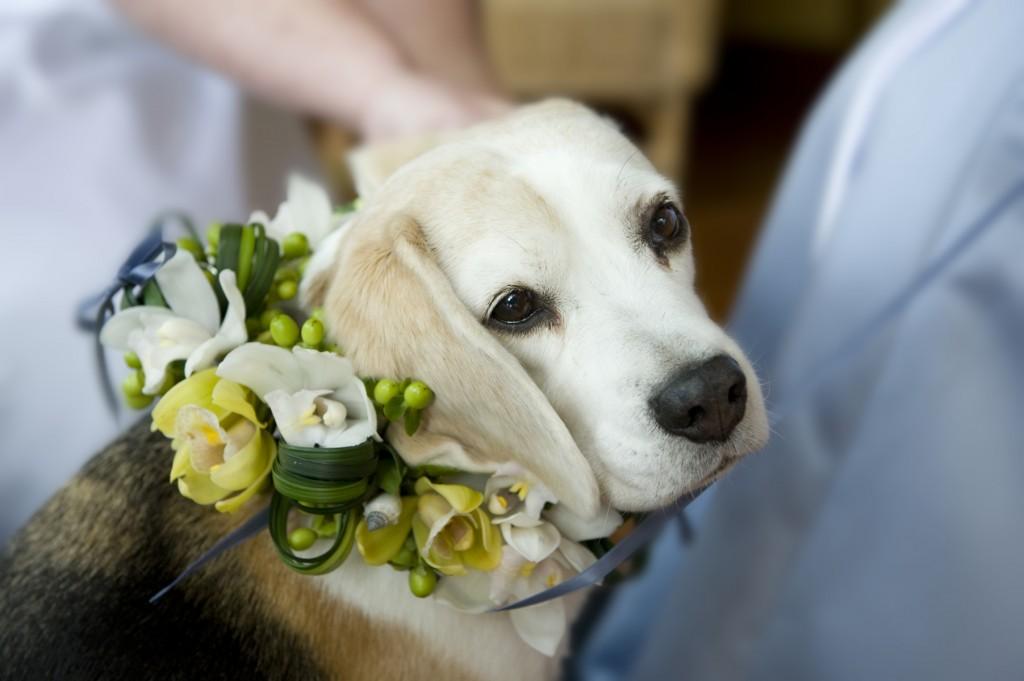 Sweet Loki- Fresh Flower Dog Collar