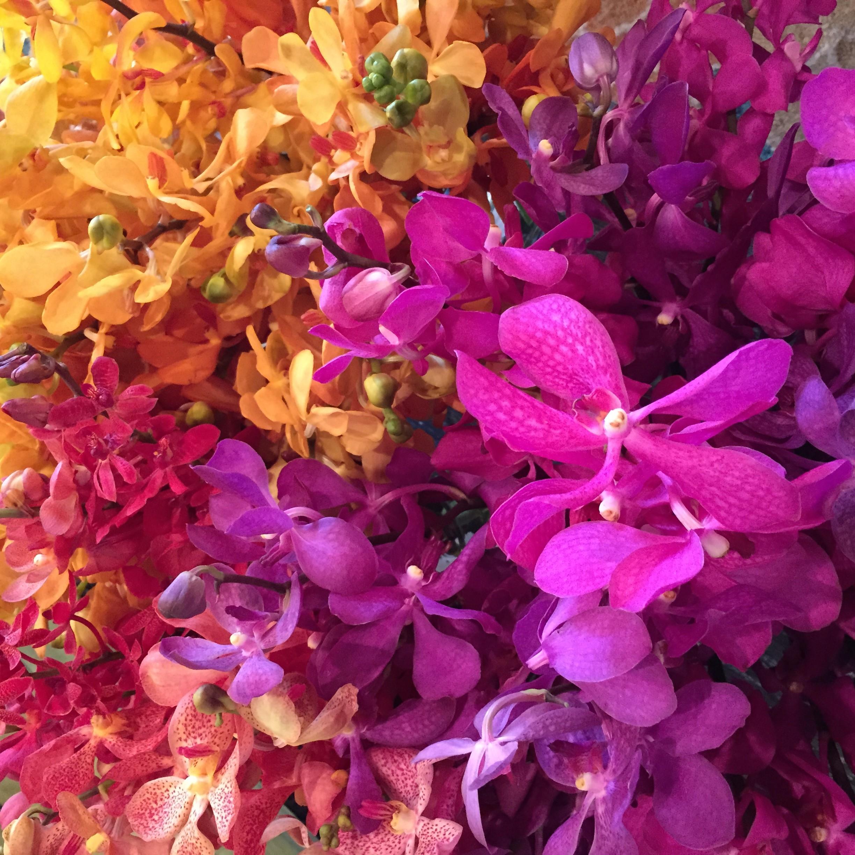 IMG 1267 e1423691237808 - Valentine's Day Flower PARADISE!