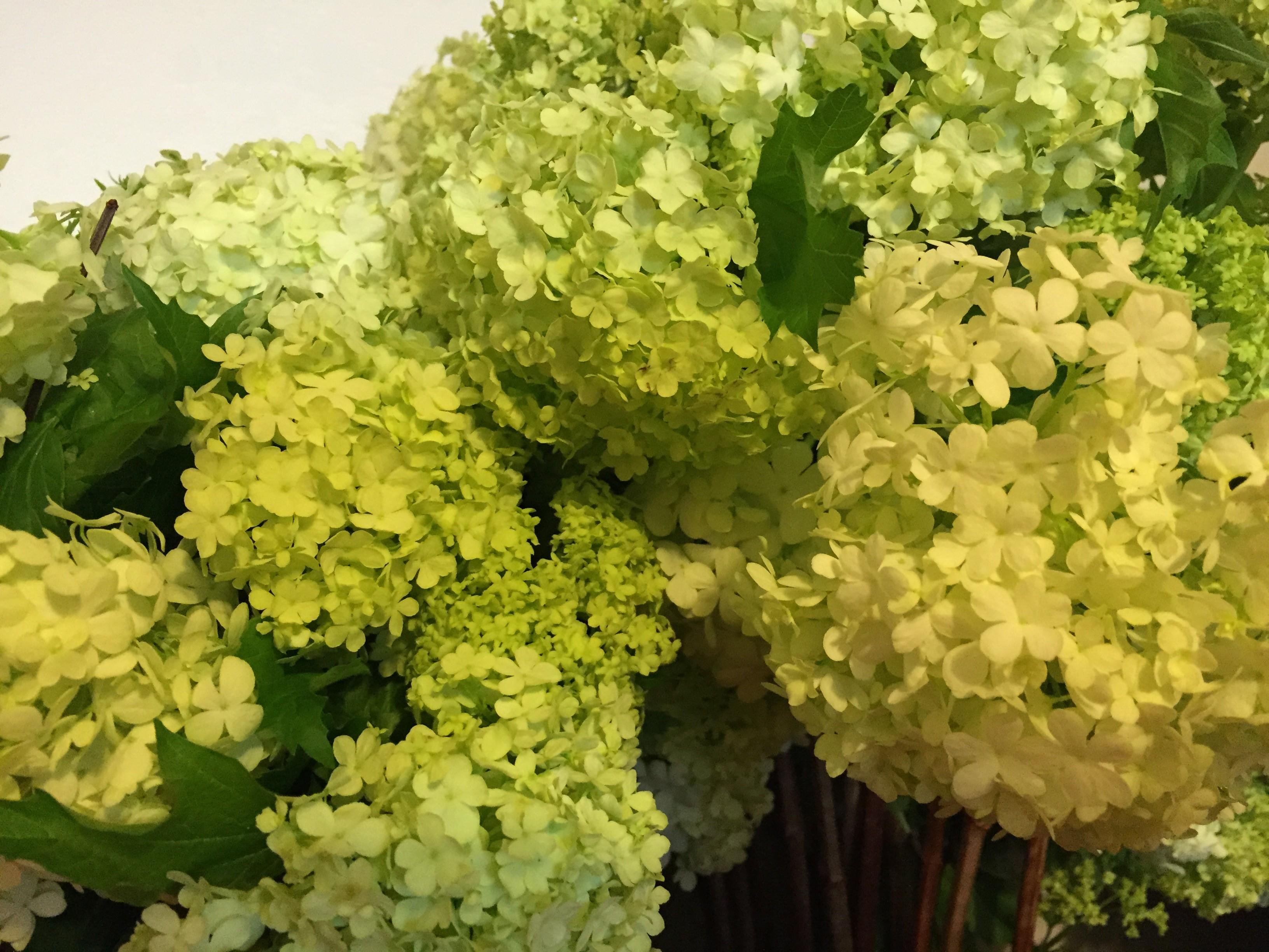 IMG 1276 e1423691178838 - Valentine's Day Flower PARADISE!
