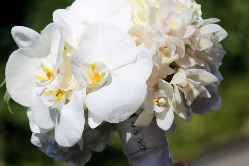 Modern Orchids