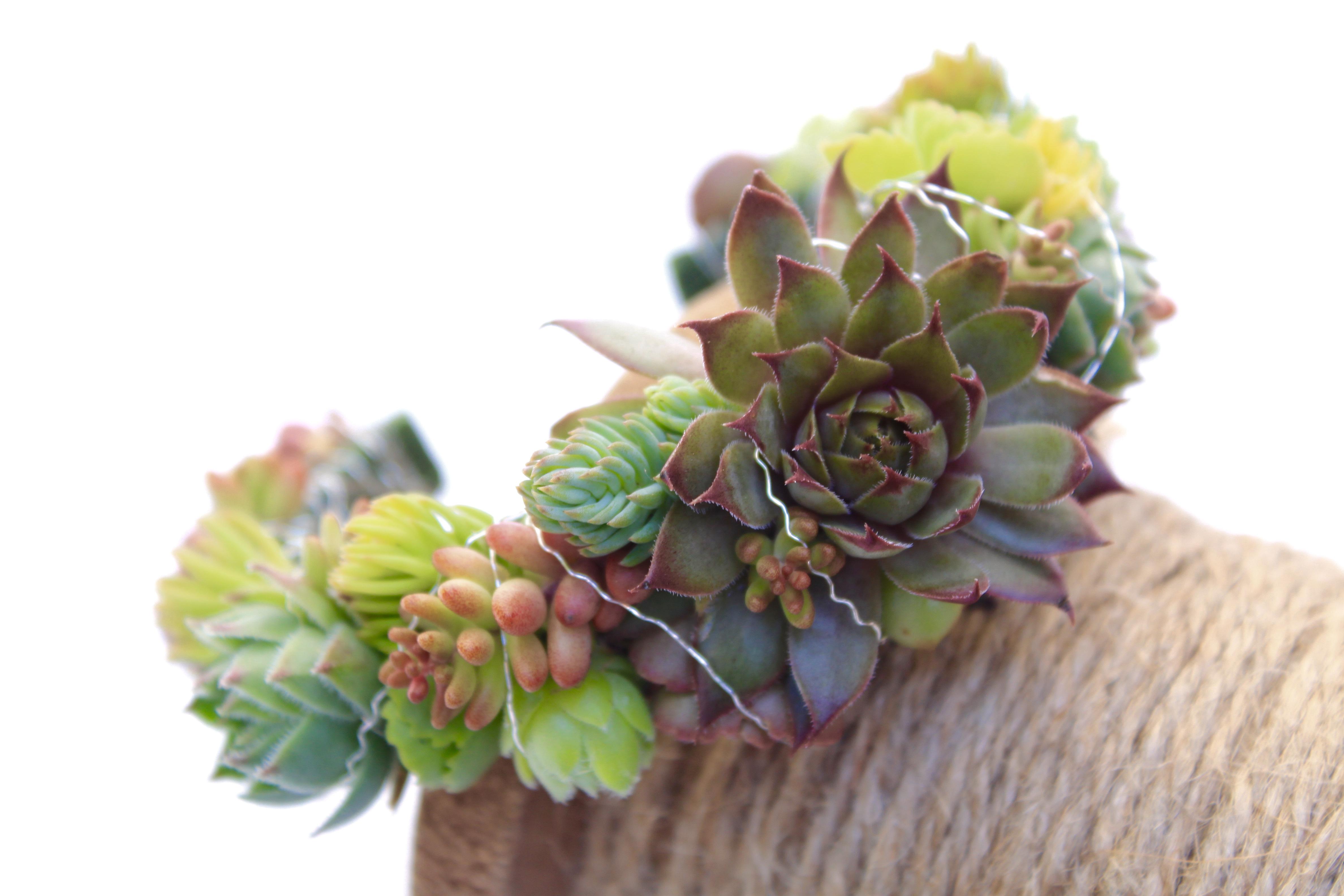 Succulent wearable art by Foxgloves Flowers