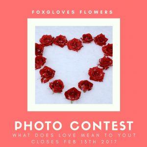 Foxgloves-flowers-photo-contest